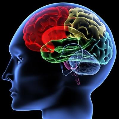 human_brain_picture_165499[1]